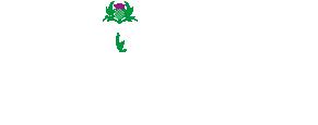 Celtic Crocodile Logo